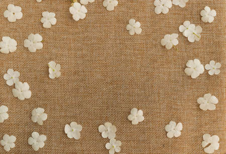 Beautiful viburnum white flowers on rustic burlap texture background. Small flower layout template flat lay and top view 스톡 콘텐츠
