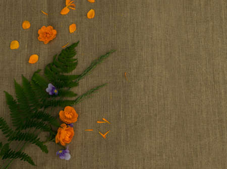 Orange petals of globe flowers or trollius europaeus on brown burlap background with blank space for text top view and flat lay Banco de Imagens