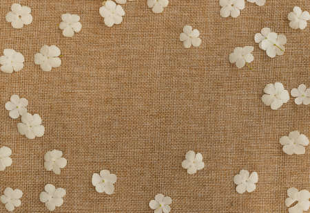 Beautiful viburnum white flowers on rustic burlap texture background. Small flower layout template flat lay and top view Banco de Imagens