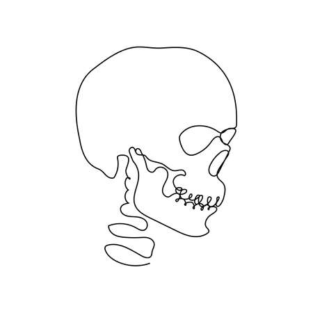 Continuous thin line human skull vector illustration, minimalist cranium sketch doodle. One line art scull icon, single outline drawing or simple skull Stock Illustratie