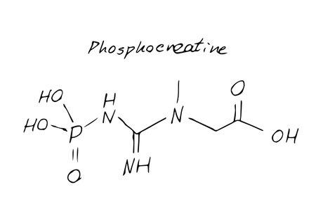 Phosphocreatine molecule formula. Hand drawn imitation of creatine phosphate structural model, C4H10N3O5P chemistry skeletal formula, phosphocreatine vector icon symbol Ilustrace