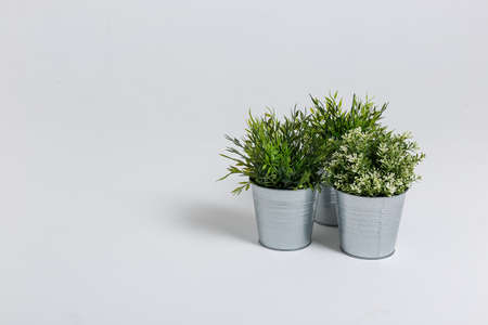 Three fresh green plants in small decorative metal buckets on a white background with a copyspace for a text.