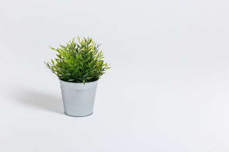 Fresh green plant in a small decorative metal bucket on a white background with a copyspace for a text. Ecological concept