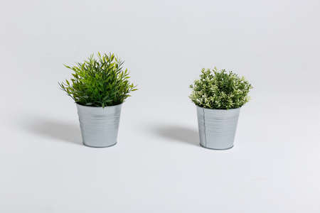 Two fresh green plants in small decorative metal buckets on a white background with a copyspace for a text. Ecological concept Reklamní fotografie