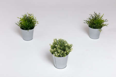 Three fresh green plants in small decorative metal buckets on a white background with a copyspace for a text. Ecological concept Reklamní fotografie