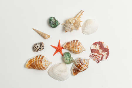 colorful sea shells randomly scattered in heap on white background. seashells, red starfish isolated flatlay with copyspace. top view on collection of mollusc shells. summer vacation at seashore
