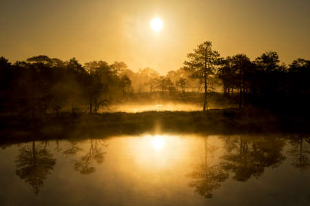 Sunrise in the bog, golden marsh, lakes and nature