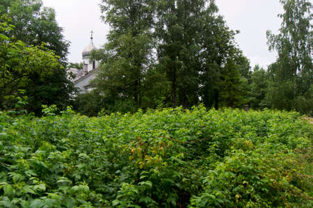 chaparral: Overgrown garden and Orthodox Church