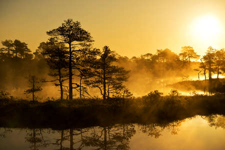 bog: Sunrise in the bog, golden marsh, lakes and nature