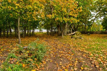 near: Autumn near the sea Stock Photo