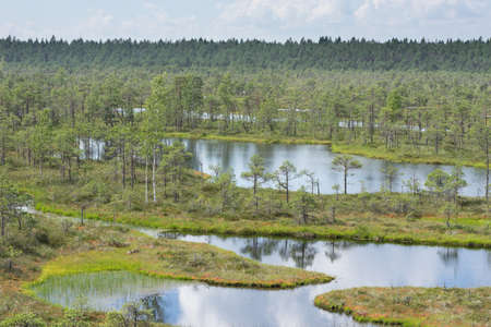 slough: Swamp, birches, pines and blue water. Evening sunlight in bog. Reflection of marsh trees. Fen, lakes, forest. Moor in summer evening. Slough natural environment. Endla Nature Reserve, Estonia, Europe
