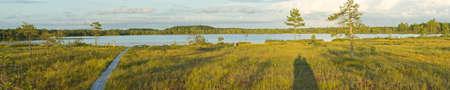 Panorama of bog. Kakerdaja swamp in Estonia, Europe. Trees and lake, natural environment. Stock Photo