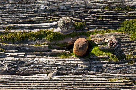 Rusty nail in mossy rotten wood