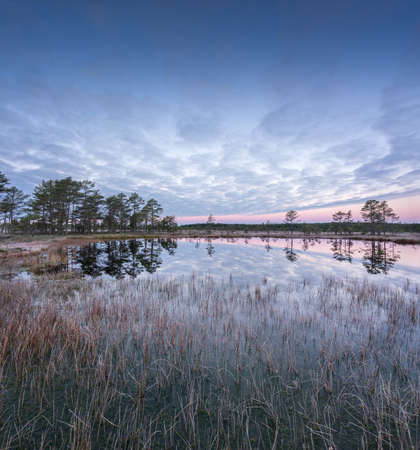 Sunrise in the bog. Icy cold marsh. Frosty ground. Swamp lake and nature. Freeze temperatures in moor. Muskeg natural environment. Beautiful trees, sky and cloud reflection in water in the fen. Stock Photo