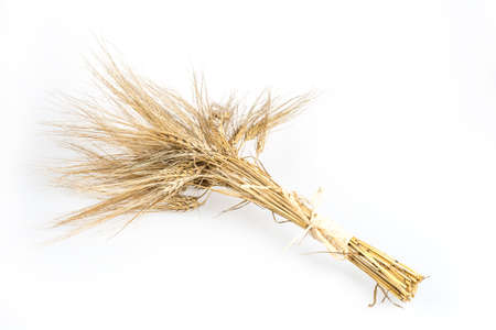 booty: Barley bunch isolated on white background. Grain bouquet, golden spikelets.