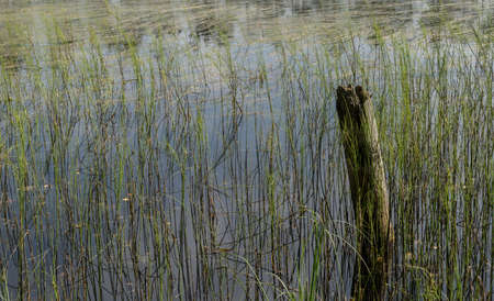 Remnants of the old abandoned wooden bridge. Desolate pier. Forest and sky reflection on water. Shore of a single lake Stock Photo