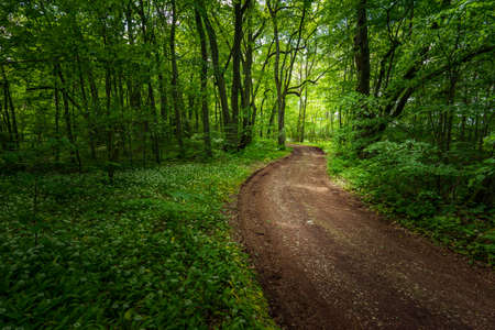 Trail in the woods in beautiful spring landscape. Walking path in the mixed forest.