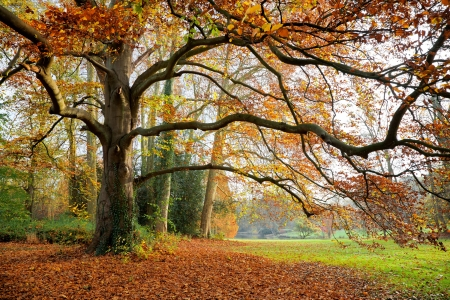 Autumn Landscape. Park in Autumn. Forest  in Autumn. Dry leaves in the foreground. Stock Photo