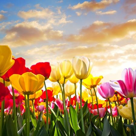 flower bed: Floral Background. Sunset. Spring landscape.. Stock Photo
