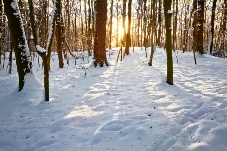 Sunset in a winter forest. Winter landscape. Stock Photo