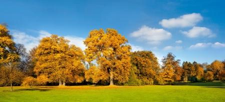 Panorama. Beautiful autumn trees. Autumn landscape.