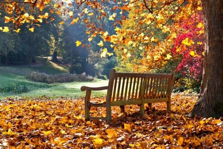 秋の公園のベンチ。秋の風景です。