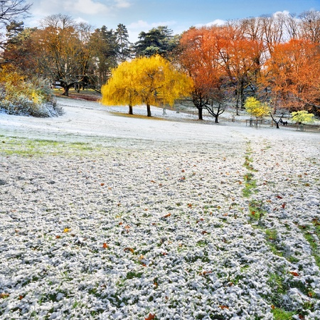 changing seasons: The first snow in the autumn park  Autumn and winter landscape