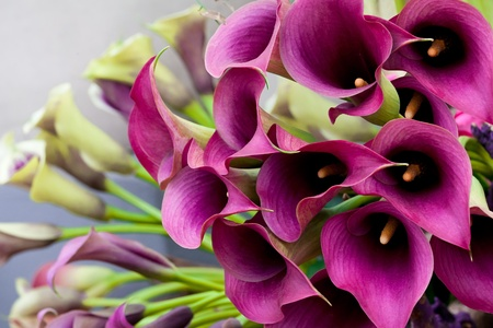 birthday flowers: Beautiful bouquet of calla lilies. Abstract background.