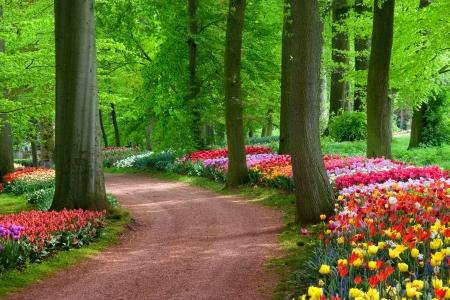 Park in de lente Tulpen Lente landschap