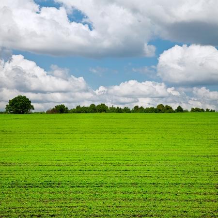 rural development: Winter wheat fields in the spring  Spring landscape