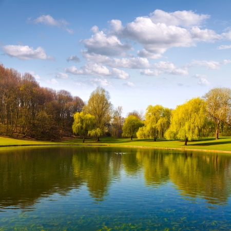 Spring Park Lake in het voorjaar park Vogels op het meer Stockfoto