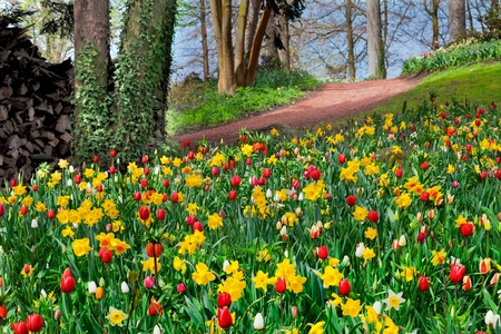 spring landscape: Colorful tulips in the park  Spring landscape  Stock Photo