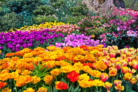 Colorful tulips in the park  Spring landscape  Stock Photo
