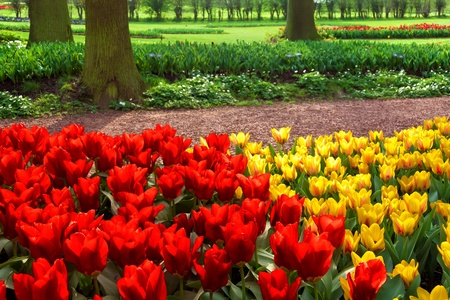 Colorful tulips in the park  Spring landscape Stock Photo - 18658507