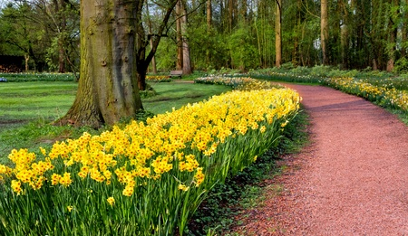 Group of yellow tulips in a park  Spring landscape Stock Photo - 18658539