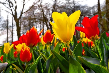 Colorful tulips in the park  Spring landscape Stock Photo - 18658489