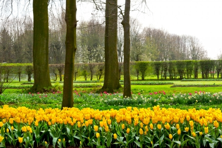 Group of yellow tulips in a fpark  Spring landscape Stock Photo - 18658506