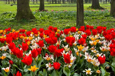 Colorful tulips in the park  Spring landscape  Stock Photo - 18658502