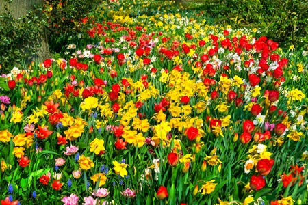 Colorful tulips and narcissus in the park  Spring landscape Stock Photo - 18658548