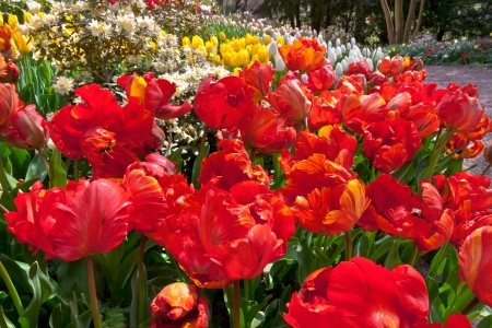 Colorful tulips in the park  Spring landscape Stock Photo - 18658505