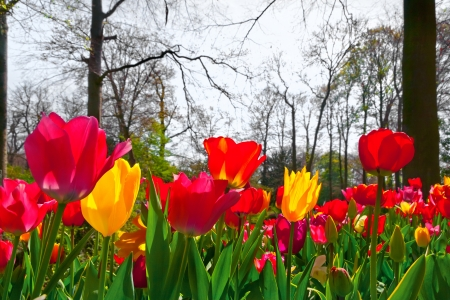 Colorful tulips in the park  Spring landscape Stock Photo - 18658493