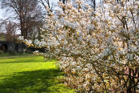 flowering plant: Sunny day in the park  Spring landscape