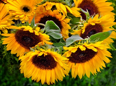 Bouquet of sunflowers  Floral background  photo