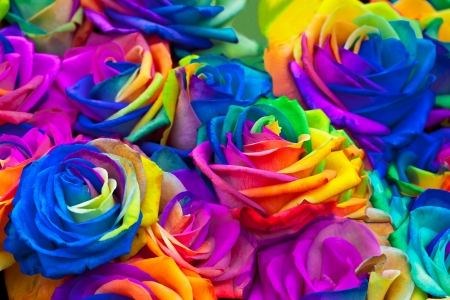 A bouquet of rainbow roses. Floral pattern.
