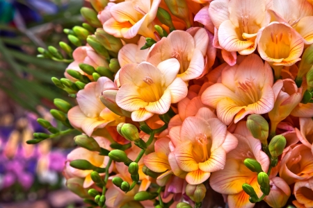 Bouquet of yellow and pink flowers. Floral pattern. Stock Photo - 20259999