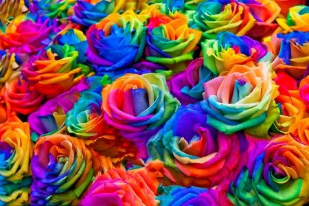 Een boeket van regenboog rozen. Bloemenpatroon. Stockfoto