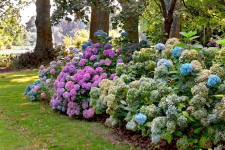 azaleas: Azaleas in the summer park. Summer landscape. Stock Photo