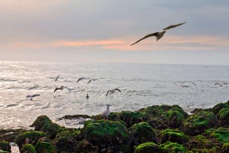 gliding: Gulls on the beach. Seascape. Stock Photo