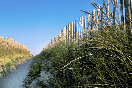 north holland: The passage between the dunes. Access to the sea.