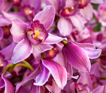 purples: Purples bouquet of orchids. Floral pattern. Abstract background.  Stock Photo